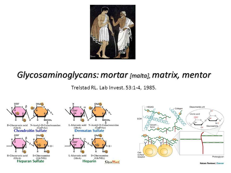 Glycosaminoglycans: mortar [malta], matrix, mentor